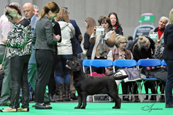 Junior - Bitch 2nd	CRAZY IN LOVE Z GRODU HRABIEGO MALMESBURY [ATC AS00000POL] ( MRS A CHORAB)