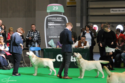 Junior - Dog 1st	TRENDLEWOOD BORN TO RUN JW (MR D L & MRS F E M BRADDON) 2nd	WAHNAHNISH SILVER SECRET [ATC AU02358NLD] (MR P M J M CANDEL)