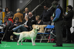 Post Graduate - Dog  2nd	SHANORRELL STRAW BOATER AT HALSHIMOOR ( BALSHAW & RAWLINSON)