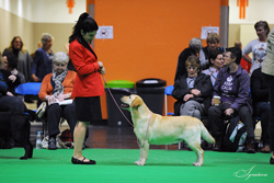 Special Working Gundog - Bitch VHC	IT/HUN/EUR/INT CH LOCH MOR SAFFRON (MISS M BASILICO)