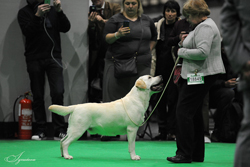 BEST OF BREED TISSALIAN HI JACK JW (MRS C BAILISS)